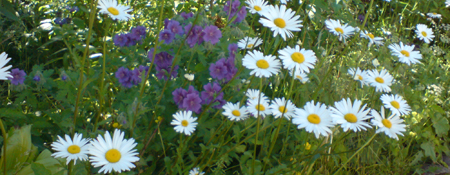 images/stories/slideshow/blumen.jpg