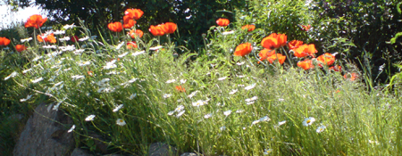 images/stories/slideshow/mohn.jpg