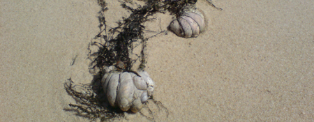 images/stories/slideshow/muscheln.jpg
